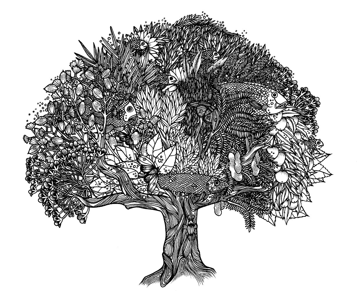 Tree illlustration Tom Berry